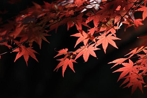 白馬渓の紅葉2
