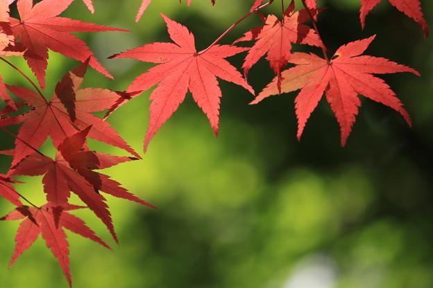 白馬渓の紅葉3