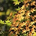 白馬渓の黄葉