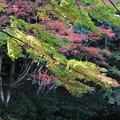 Photos: 白馬渓の紅葉4