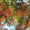 白馬渓の紅葉5