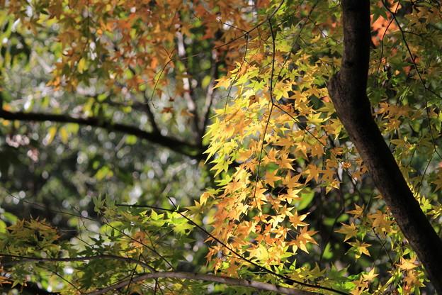 白馬渓の黄葉2