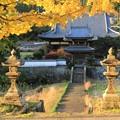 お寺とイチョウ1