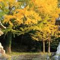 Photos: お寺とイチョウ2
