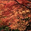Photos: 用作公園3