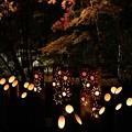 普現寺ライトアップ3