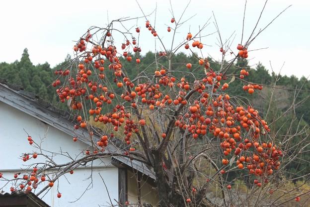 柿の木は残った