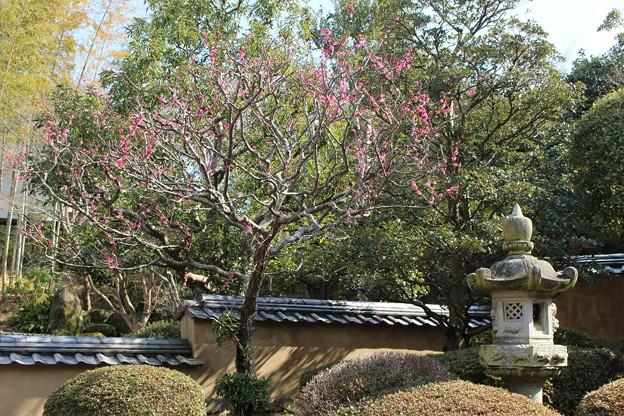 中根邸の庭