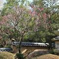 Photos: 中根邸の庭