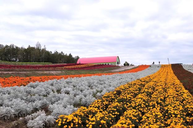 写真: 美瑛四季彩の丘