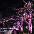 Photos: 目黒川イルミネーション
