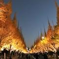 Photos: 絵画のような銀杏並木