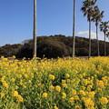 Photos: 南国の春風