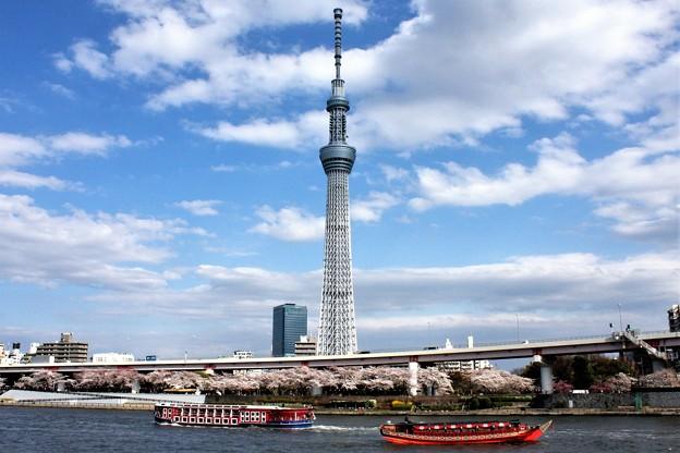 Photos: 春のうららの隅田川