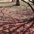 枝影にも咲くごとく