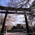 Photos: 厳かな春