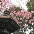 Photos: 高輪にて