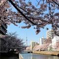 菊川橋から