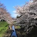 Photos: 平成の春