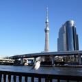 Photos: 隅田公園