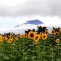 真夏の富士