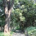 Photos: 涼風