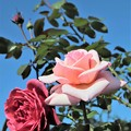 Photos: Red&Pink