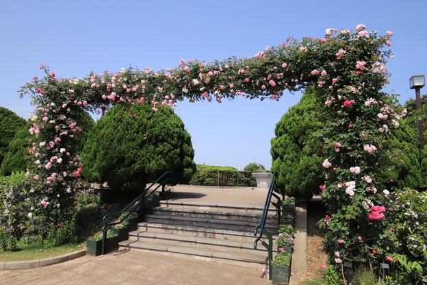Photos: 港のみえる丘公園