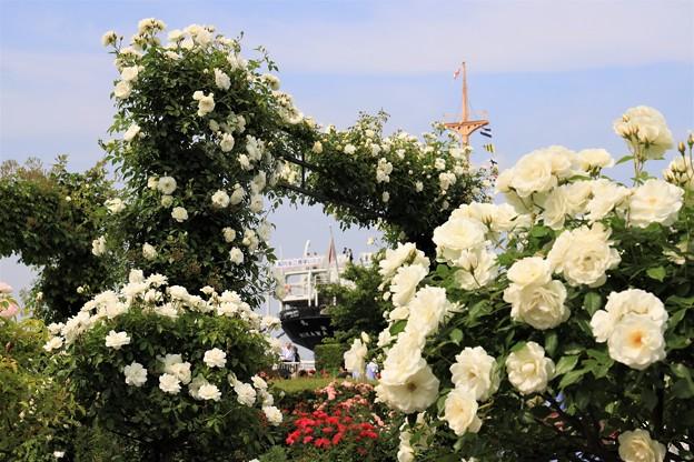 白バラと氷川丸