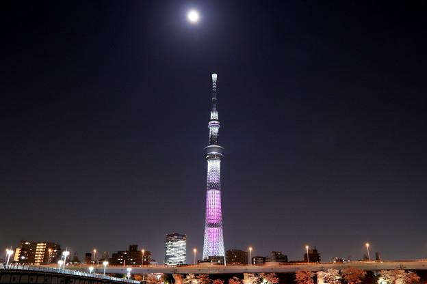Photos: 桜月