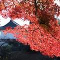 Photos: 皇居錦秋