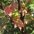 Photos: 秋への移ろい
