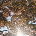 Photos: 陽光