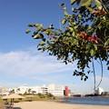 都会の浜辺