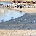 Photos: 水辺の憩い