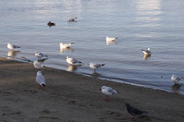 Photos: 穏やかな水辺