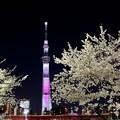 Photos: 夜桜ライトアップ