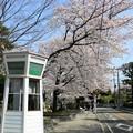 Photos: 元町公園