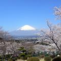 Photos: 桜の季節