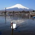 春の山中湖