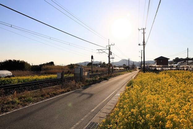 Photos: 菜の花線