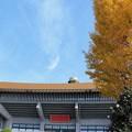 Photos: 冬の武道館