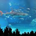 Photos: 美ら海水族館