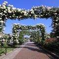 山下公園バラのアーチ