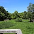 Photos: 湿生花園