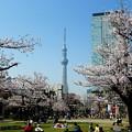 Photos: 錦糸公園
