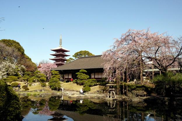 Photos: 浅草伝法院