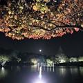 Photos: 紅葉ライトアップと月