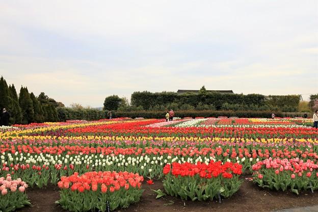Photos: 戸川公園