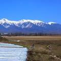 Photos: アルプスの山並み